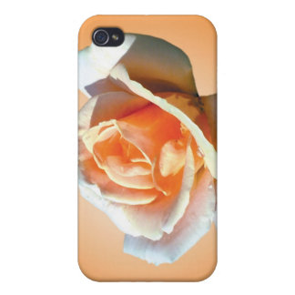 single yellow rose flower in yellow background cases for iPhone 4