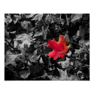Singled Outed Maple Leaf Poster