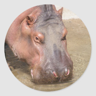 Sipping Hippo Stickers