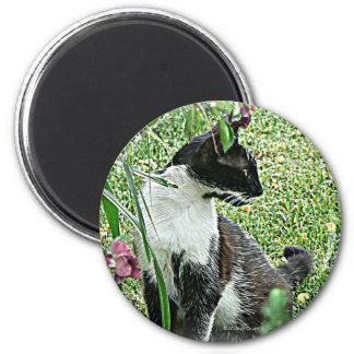 """""""Sissy"""" Black & White Cat 6 Cm Round Magnet"""