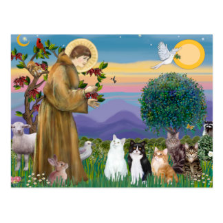 Sister Frances Blessing 5 cats Postcard