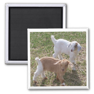 Sister's Goats Magnet