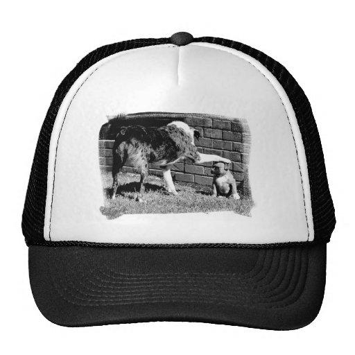 Sit- - - Stay - - - Hat