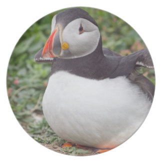 Sitting and Flapping Puffin Plate