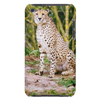 Sitting Cheetah Portrait Barely There iPod Case