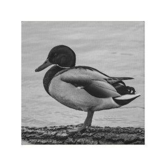 Sitting duck canvas print