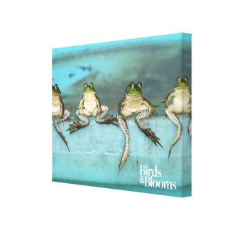 Sitting Frogs Canvas Print