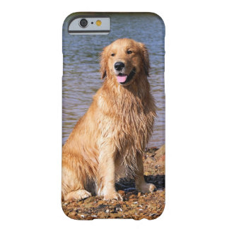 Sitting Golden Retriever iPhone 6 case
