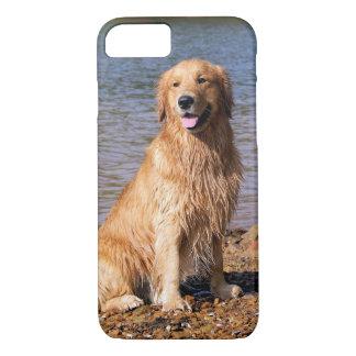 Sitting Golden Retriever iPhone 7 case