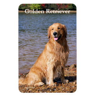 Sitting Golden Retriever Magnet