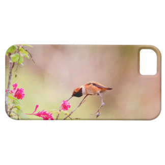 Sitting Hummingbird Sipping Flower Nectar iPhone 5 Cases