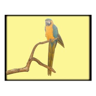 Sitting Macaw II Postcards