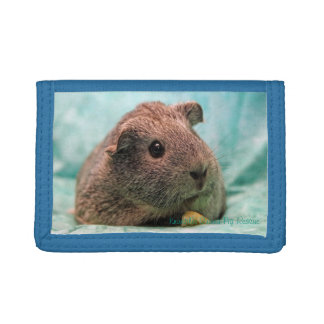 """Sitting Pretty"" Guinea Pig Wallet"
