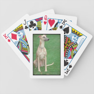 Sitting Whippet Dog Playing Cards