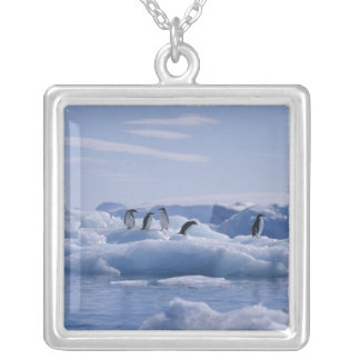 Six Adelie Penguins Pygoscelis adeliae) on an Silver Plated Necklace