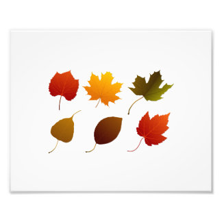 six fall colour leaves nature image graphic.png photographic print
