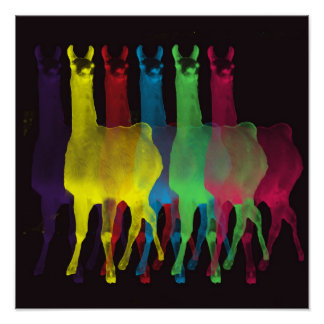 six llamas in six colors poster