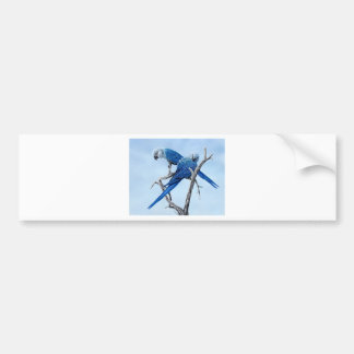 Six Macaw gifts for the Parrot lover Bumper Sticker