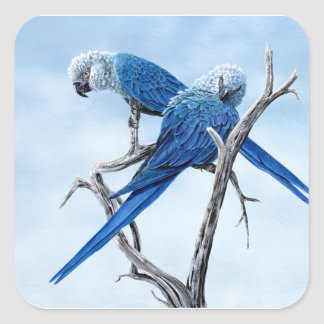 Six Macaw gifts for the Parrot lover Square Sticker
