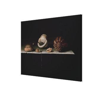 Six Shells on a Stone Shelf, 1696 Canvas Print
