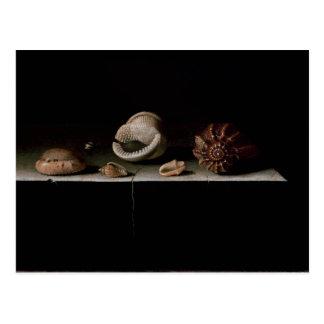 Six Shells on a Stone Shelf, 1696 Postcard