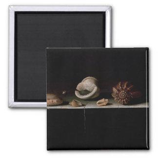 Six Shells on a Stone Shelf, 1696 Square Magnet
