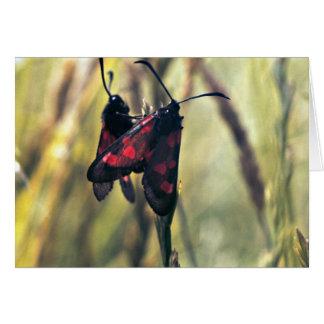 Six-Spot Burnet Moth Card