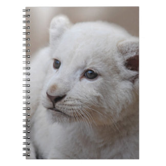 Six week old white baby lion cub spiral notebook