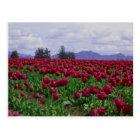 Skagit Valley Beauty Postcard