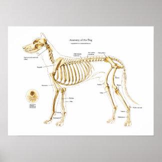 Skeletal Anatomy of the Dog Poster