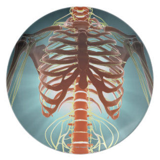 Skeleton and Nerves Party Plates