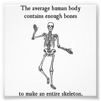 Skeleton Bones in the Average Human Body Photo Art