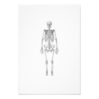Skeleton Illustration Photo Print