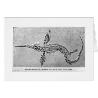 Skeleton of Ichthyosaurus art card