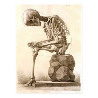 skeleton postcard