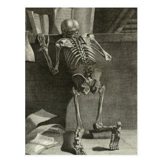 Skeleton Reading Postcard