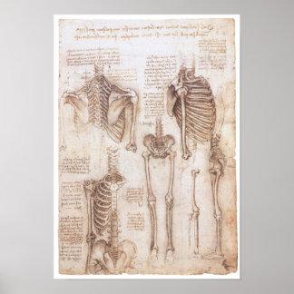 Skeleton Studies Leonardo Da Vinci 1510 Poster