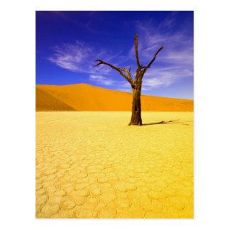 Skeleton trees in Dead Vlei Sossusvlei, Postcard