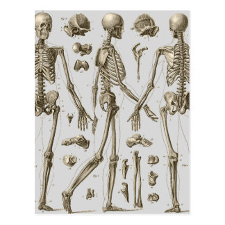 Skeletons from the Brockhaus & Efron Encyclopedia Postcard