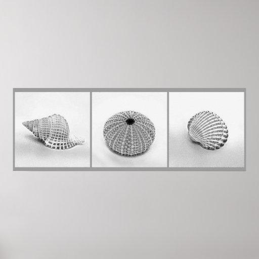 Sketched Shells Poster