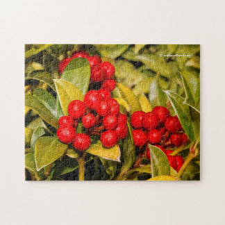 Skimmia Japonica Berries and Leaves Puzzle