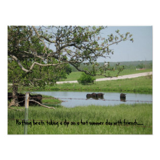 Skinny Dipping Cows Poster