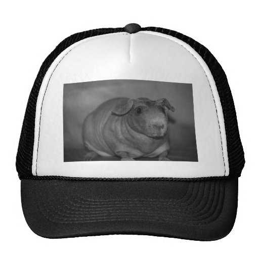 Skinny Pig in black and White Hat
