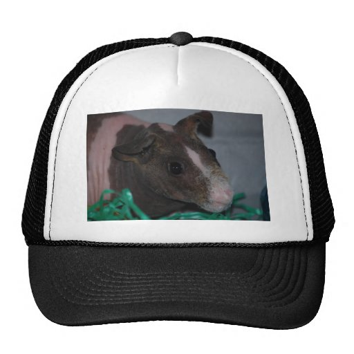 Skinny Pig with Easter Eggs Mesh Hats