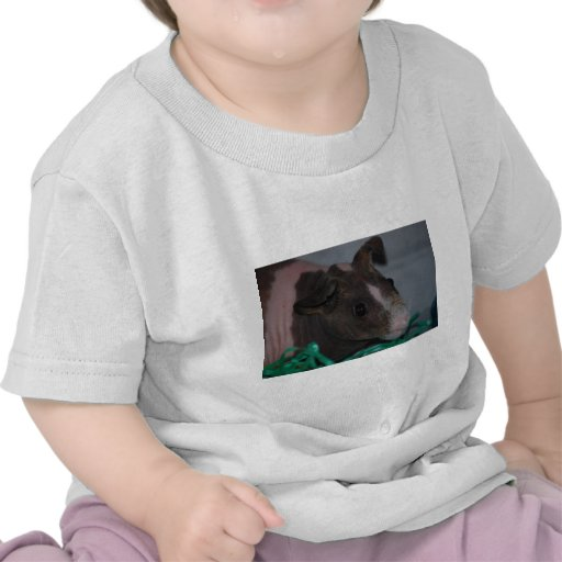 Skinny Pig with Easter Eggs Tee Shirts