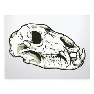 Skull 2 ~ Skulls Skeleton Mammal Animal Postcards