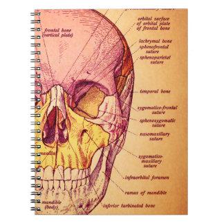 Skull anatomy spiral notebooks