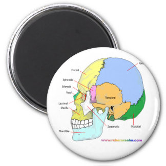 Skull (lateral) 6 cm round magnet