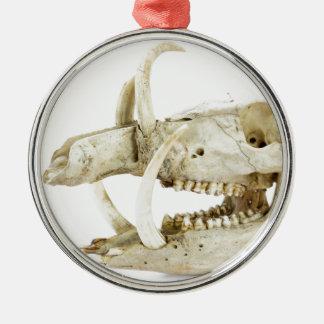 Skull of wild boar christmas ornament
