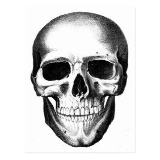 Skull Skeleton Head Scary Creepy Halloween Postcard